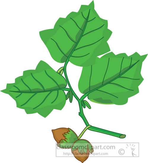 green-oak-leaf-clipart-13-11-09.jpg