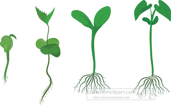 growing-of-a-plant-from-seeds-vector-illustration.jpg