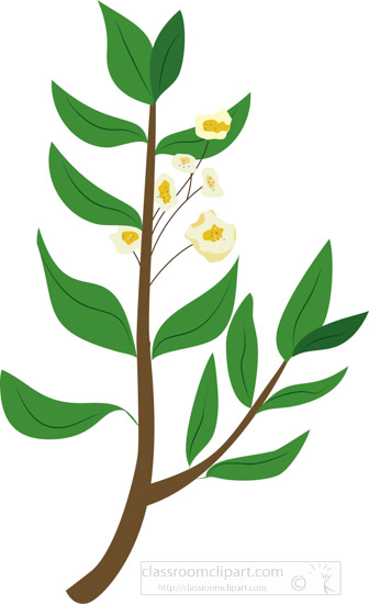 herb-plant-with-small-yellow-flowers-clipart.jpg