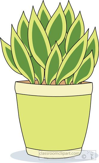 house_plant succulent_cartoon_02.jpg