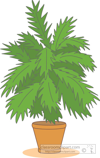 house_plants_palm_114_04.jpg