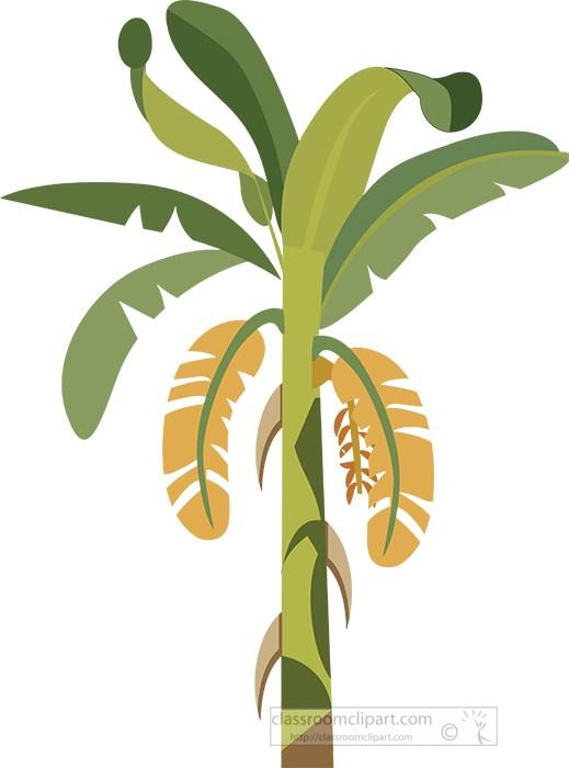 illustration-of-banaana-tree-vector-clipart.jpg