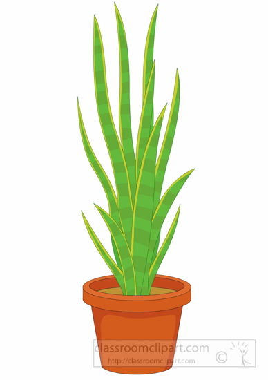 Classroom Decoration Free Download ~ Plants clipart mother in laws tongue or snake plant