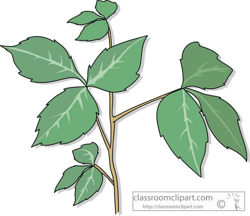 poison_ivy_plant.jpg