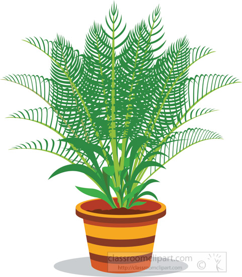 potted-areca-palm-plants-clipart.jpg
