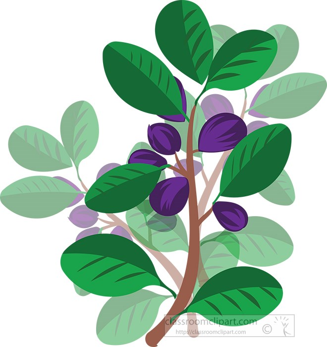 purple-fruit-plant-with-green-leaves.jpg