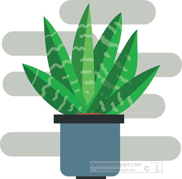 succulent-snake-plant-in-pot-clipart.jpg