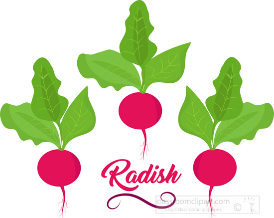 three-radish-vegetables-with-word-sign-clipart.jpg