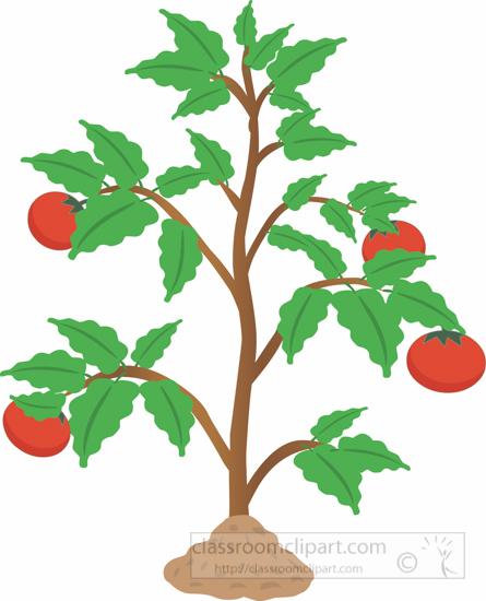 tomato-plant-clipart-3.jpg