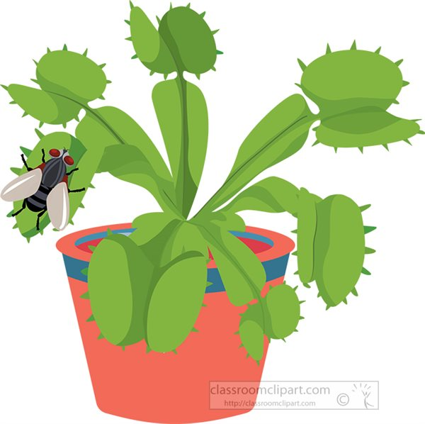 venus-fly-trap-plant-with-fly-on-lobe-clipart.jpg