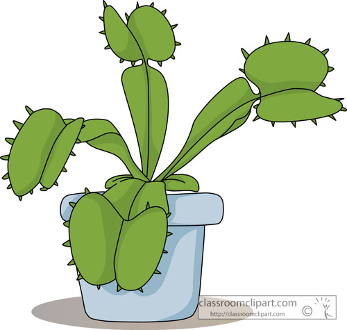 venus_fly_trap_plant.jpg