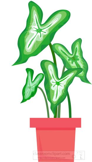 white-green-caladium-plant-in-a-pot-clipart.jpg