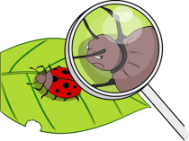 >Search Results for magnify - Clip Art - Pictures ...
