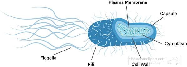bacteria-cross-section-labeled-parts-vector-clipart.jpg