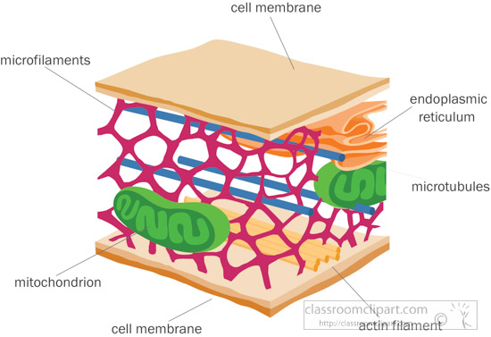 cytoskeleton-cell-membrane-clipart.jpg