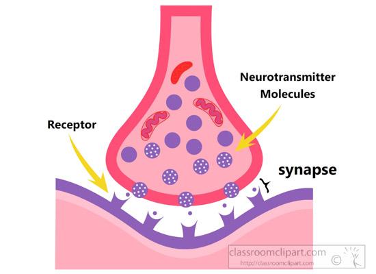 human-nerve-synapse-clipart-6227.jpg
