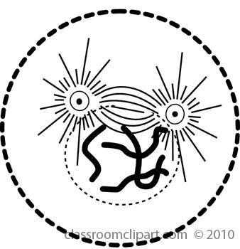 mitosis3.jpg