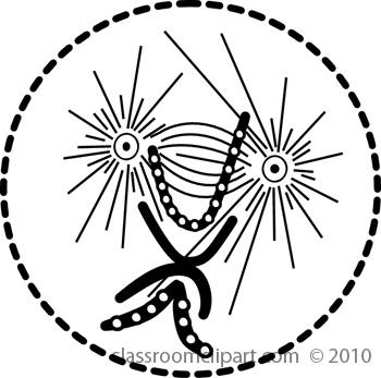 mitosis4.jpg
