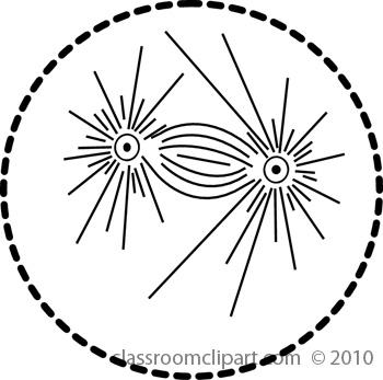 mitosis5.jpg