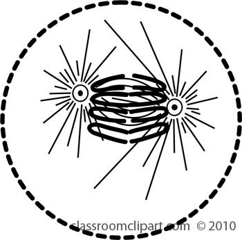mitosis6.jpg