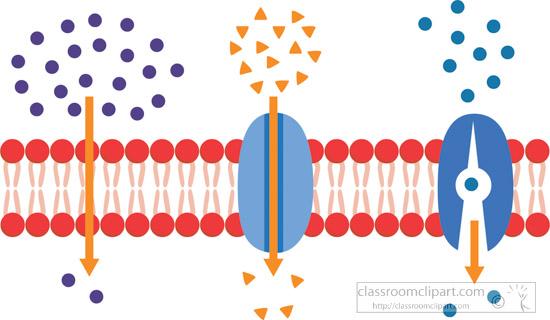 passive-transport-of-molecules-across-cell-membrane-clipart.jpg