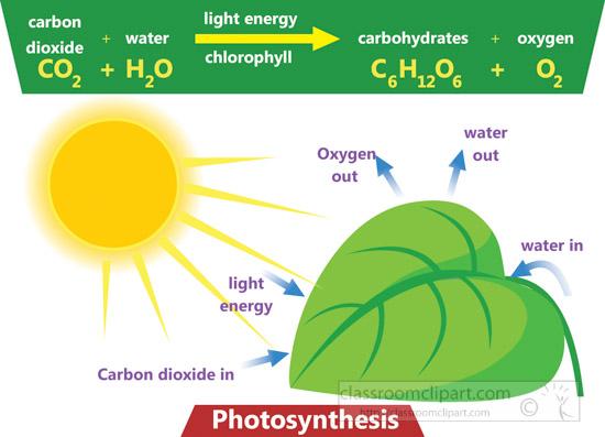 photosynthese-carbon-dioxide-light_engery-clipart.jpg