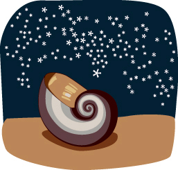 nautilus-sea-shell-clipart-133.jpg