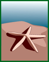 sea-shell-starfish-clipart-132.jpg