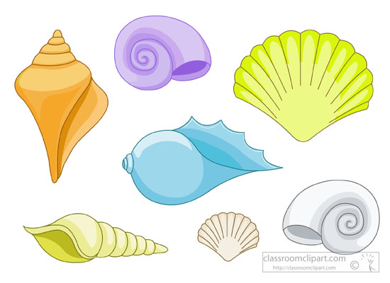 variety-seashells-with-white-background-clipart-5734.jpg