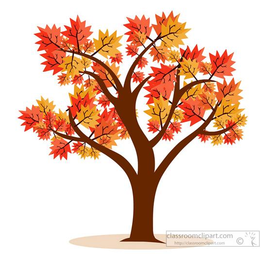 maple-tree-fall-foliage-14.jpg