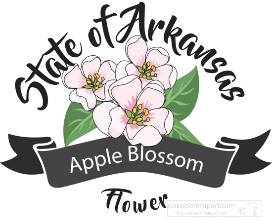 state-flower-of-arkansas-apple-blossom-clipart-image-6123.jpg