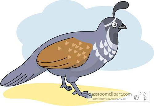 California Quail Hits 570  Quail Bird Clipart