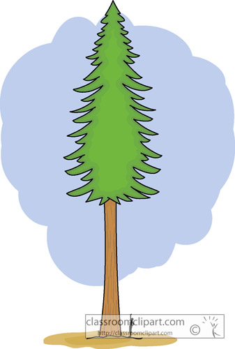 redwood_tree.jpg