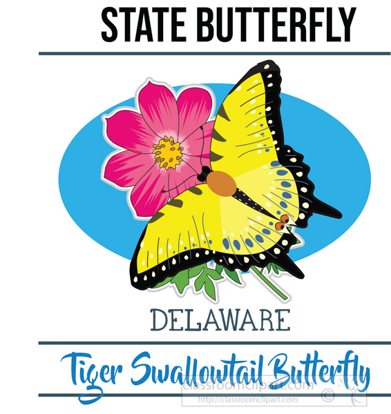 delaware-state-butterfly-tiger-tailed-swallowtail-butterfly-vector-clipart-image.jpg