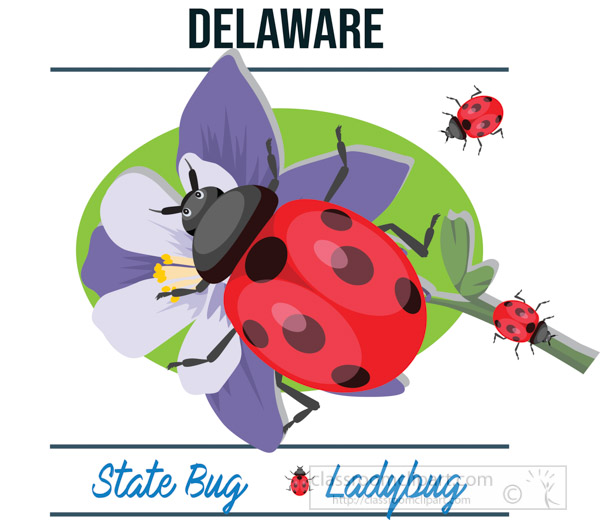 delware-state-bug-ladybug-vector-clipart-image.jpg