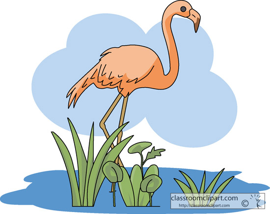 flamingo_bird_1217.jpg