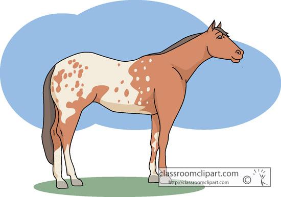 idaho_state_horse_appolossa.jpg