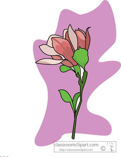 mississippi_state_flower.jpg