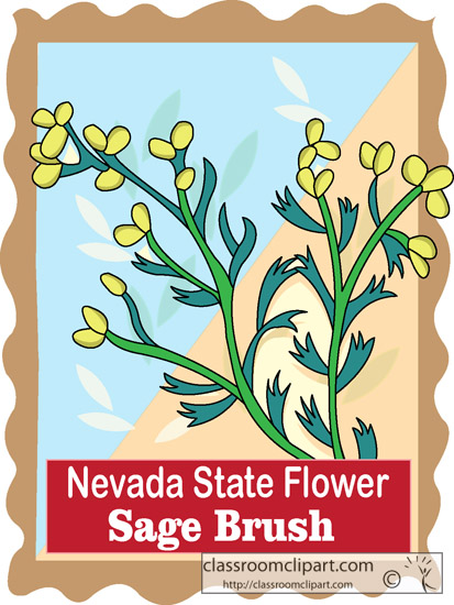 nevada_state_flower_sage_brush.jpg