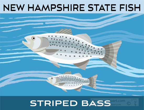 new-hampshire-state-fish-striped-bass-clipart-image.jpg
