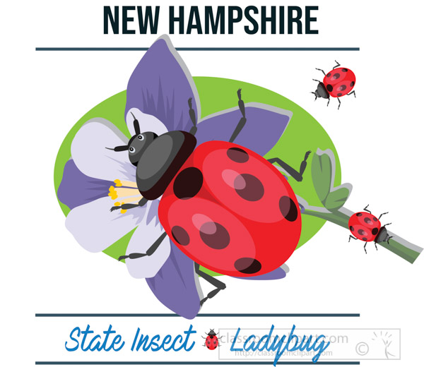 new-hampshire-state-insect-ladybug-vector-clipart-image.jpg