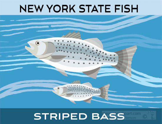 new-york-state-fish-striped-bass-clipart-image.jpg