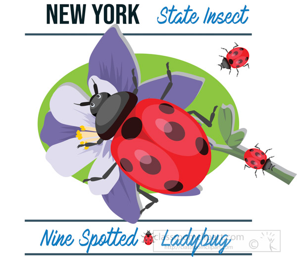 new-york-state-insect-nine-spotted-ladybug-vector-clipart-image.jpg