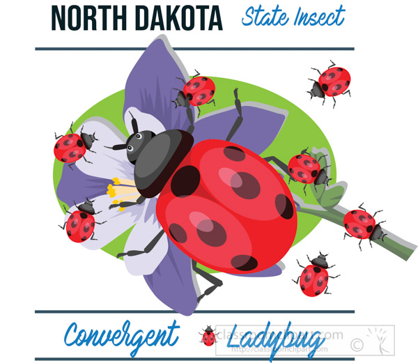 north-dakota-state-insect-convergent-lady-beetle-vector-clipart-image.jpg