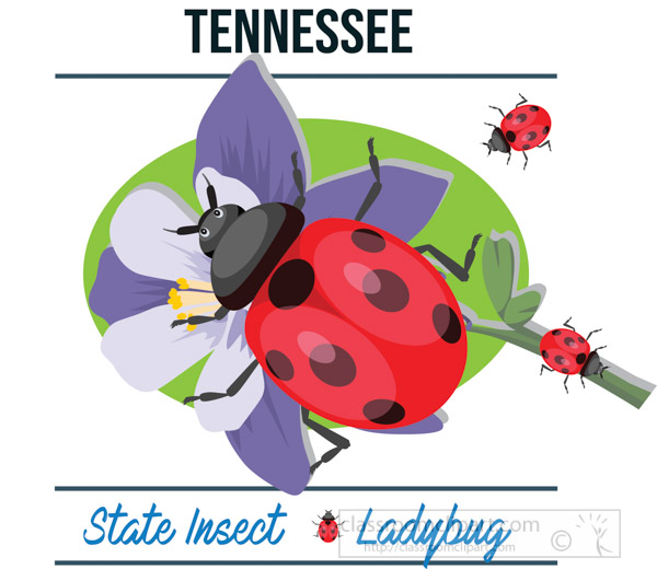 tennessee-state-insect-ladybug-vector-clipart-image.jpg