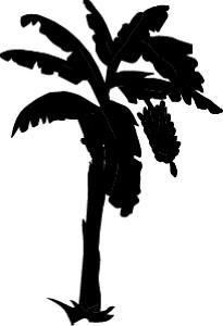 bananabw-2.jpg