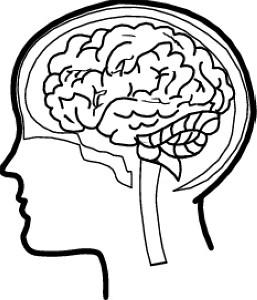 brain-06.jpg