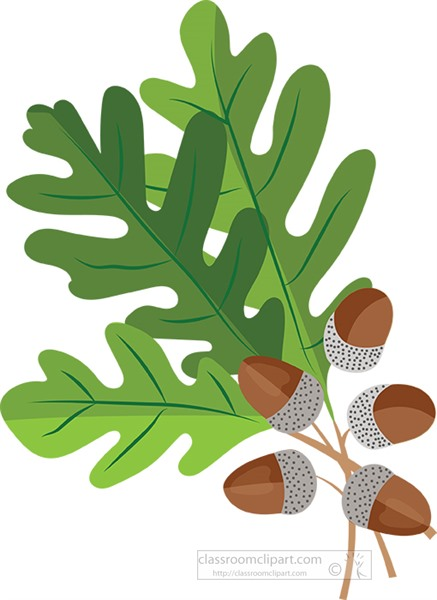 oak-tree-leaves-with-acorns-clipart.jpg