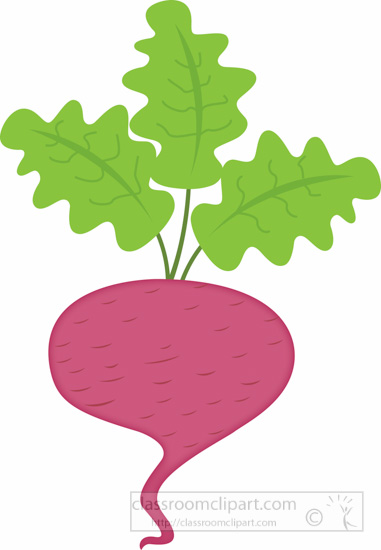 beet-vegetable-clipart-516.jpg