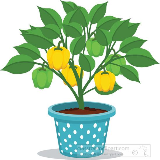 capsicum-potted-plants-clipart.jpg